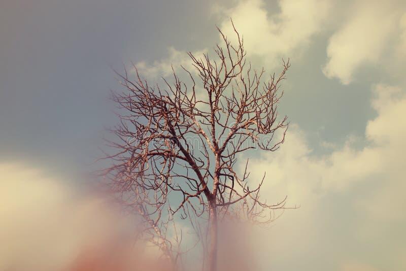 image rêveuse automnale abstraite et surréaliste des branches nues à la forêt, contre le ciel images libres de droits