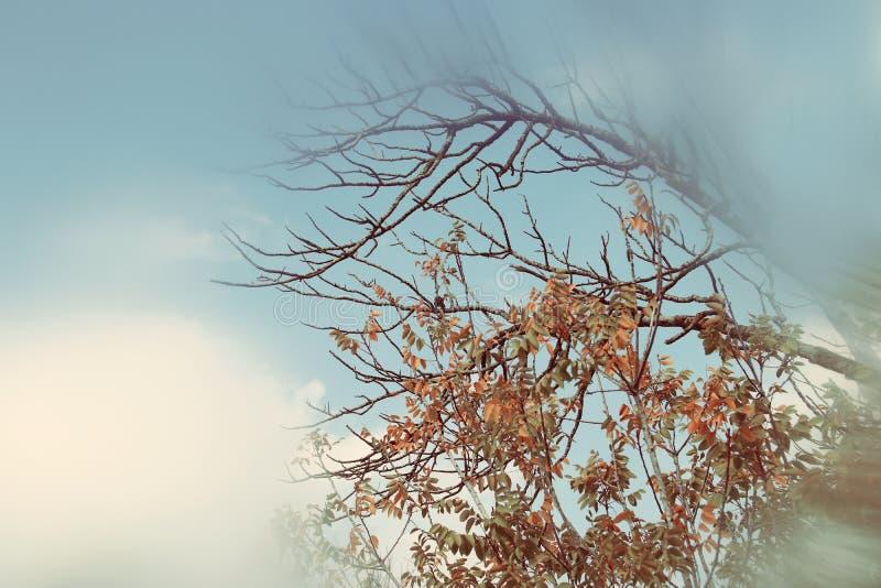 image rêveuse automnale abstraite et surréaliste des branches nues à la forêt, contre le ciel photo stock
