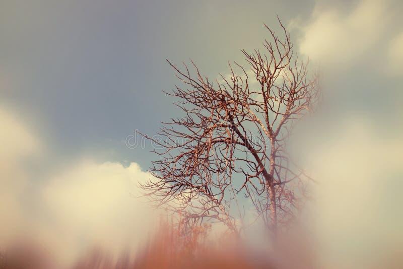 image rêveuse automnale abstraite et surréaliste des branches nues à la forêt, contre le ciel photo libre de droits