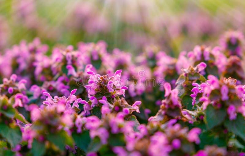Image rêveuse et brouillée abstraite de fleur Avec la fusée du soleil photos stock