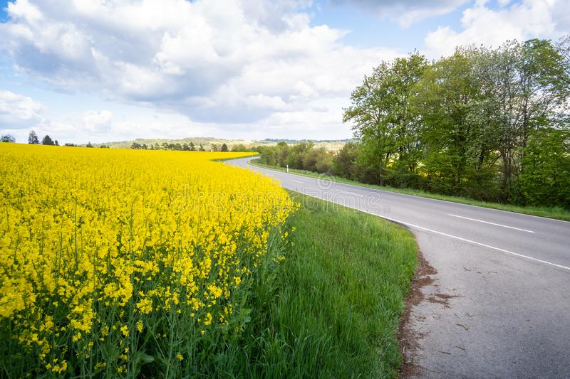 Rape field spring background. An image of a rape field spring background royalty free stock photo