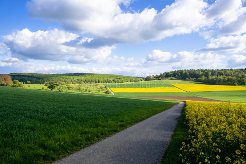 Rape field spring background. An image of a rape field spring background royalty free stock image