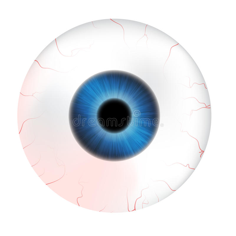 Image of realistic human eye ball with colorful pupil, iris. Vector illustration isolated on white background. Image of realistic human eye ball with colorful stock illustration