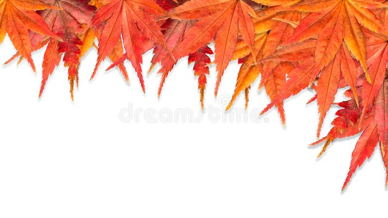 Colorful Fall Maple Leaves Frame in White Background stock image