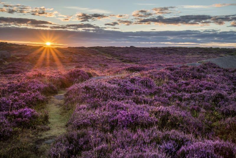 Image renversante de paysage de lever de soleil d'aube de bruyère sur le massif de roche i de Higger photos stock