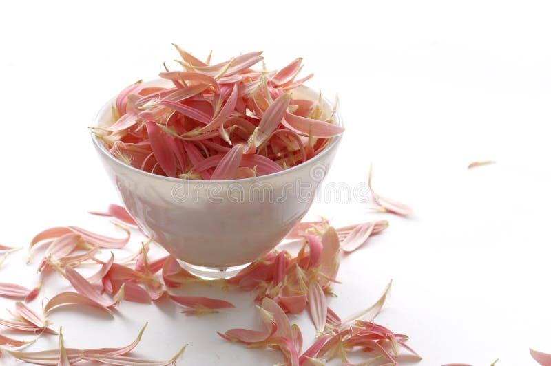 Image of Resort Spa. Pink petals royalty free stock photos