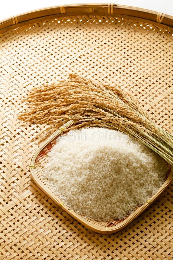 Image of rice and rice, rice production, rice food. Studio shot of rice and rice, rice production, image of rice food, Japanese rice royalty free stock photos
