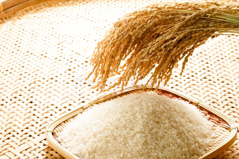 Image of rice and rice, rice production, rice food. Studio shot of rice and rice, rice production, image of rice food, Japanese rice stock images