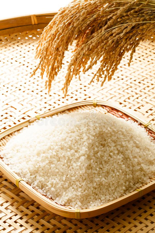 Image of rice and rice, rice production, rice food. Studio shot of rice and rice, rice production, image of rice food, Japanese rice royalty free stock image