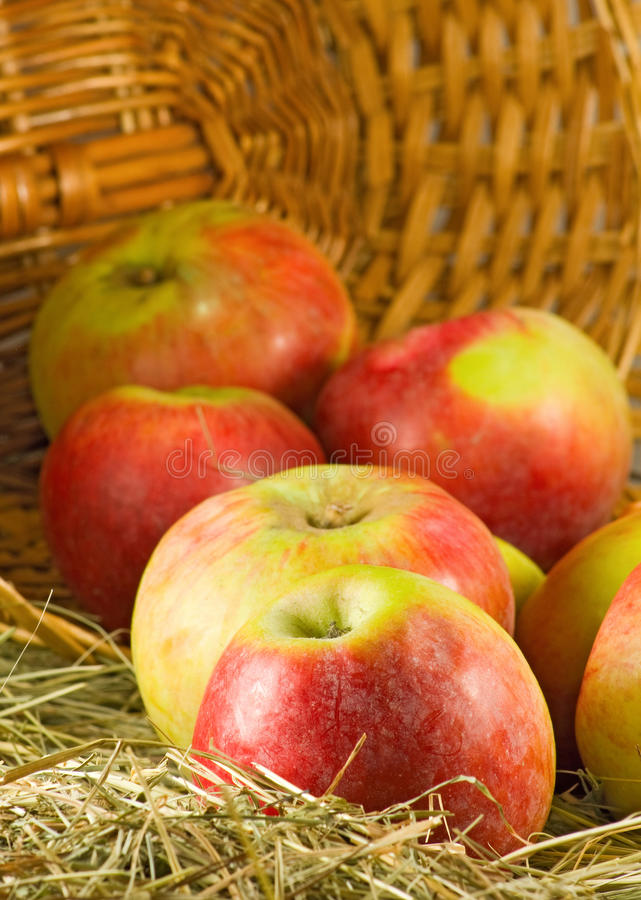 Image of ripe apples in inverted basket closeup. Image of ripe apples in inverted basket close-up royalty free stock photos