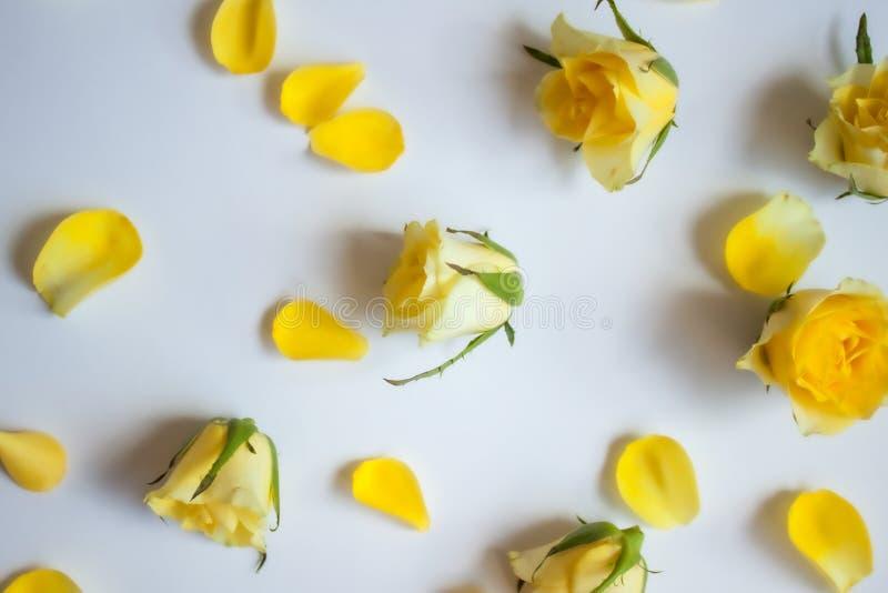 Image rose de nature du jaune petals photos libres de droits