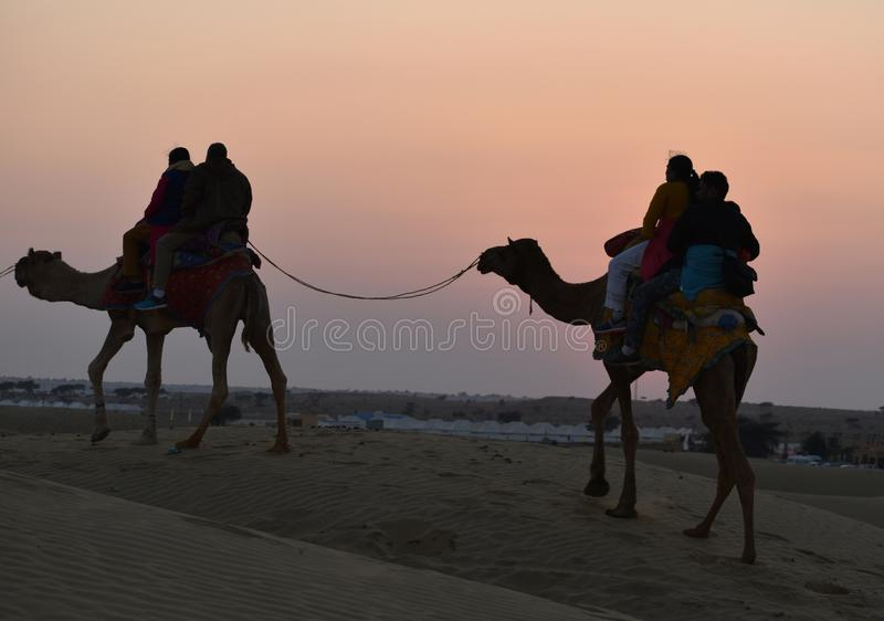 This is an image or scenery of beautiful camel safari and riding in thar desert or sam sand dunes in jaisalmer rajasthan india stock photography