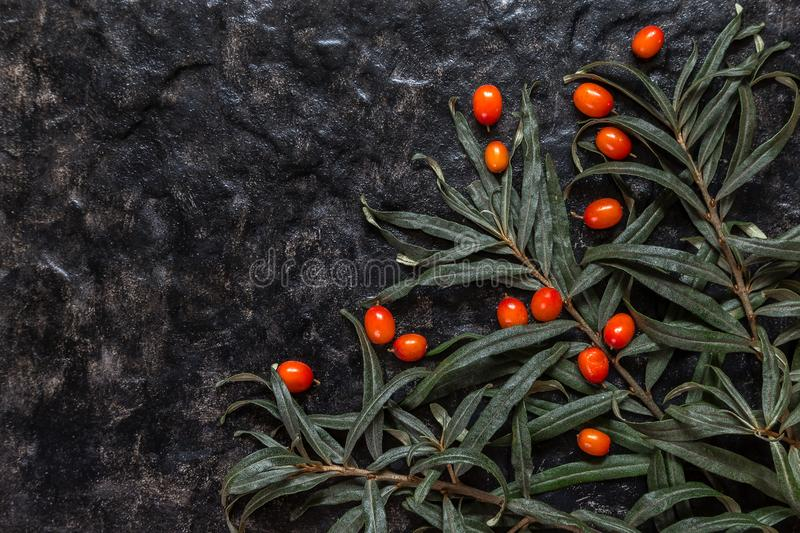 Image with sea buckthorn. stock image