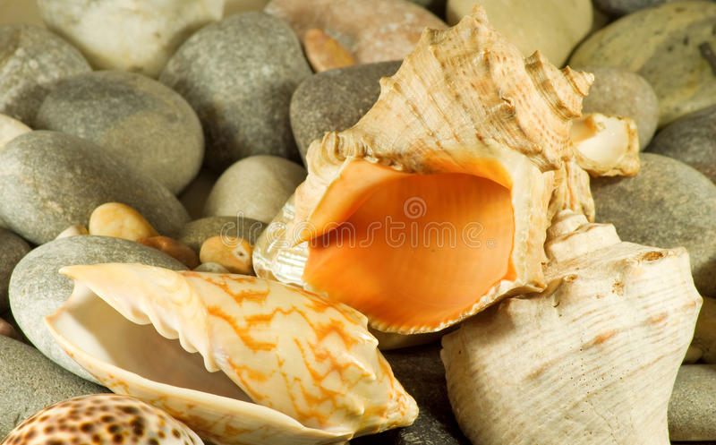 Image of seashell in the sand against the sea,. Image of stones and shells on the beach by the sea stock photo