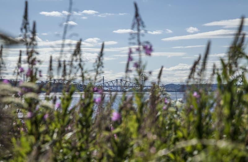 Cramond Island, Scotland - a view of a bridge through some plants. royalty free stock images