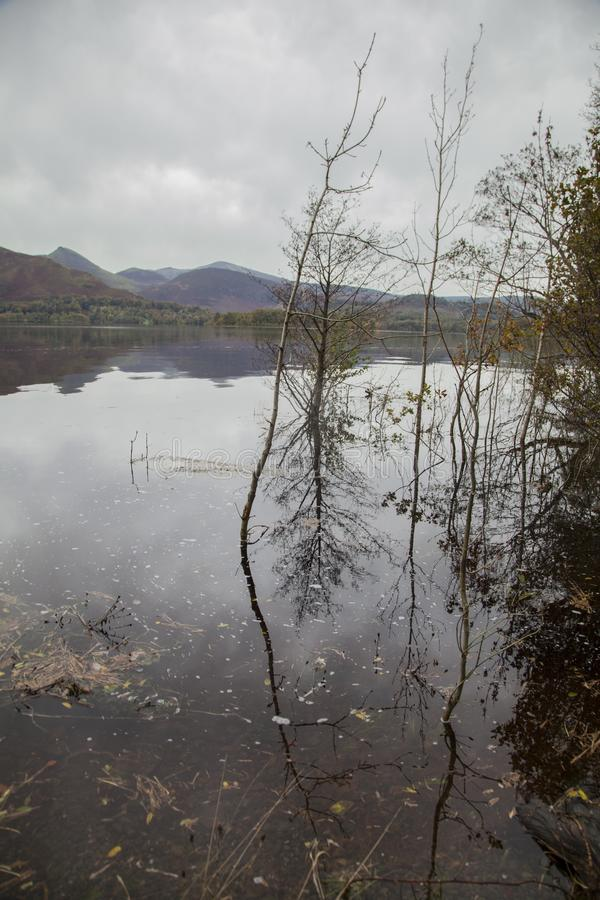 Lake District, Cumbria, England, the UK - trees in the water. This image shows a view of a forest by a lake Cumbria, Lake District, England. It was taken on a stock image