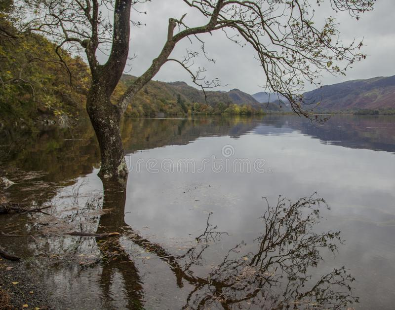 Lake District, Cumbria, England - trees in the water. This image shows a view of a forest by a lake Cumbria, Lake District, England. It was taken on a bleak day stock photography