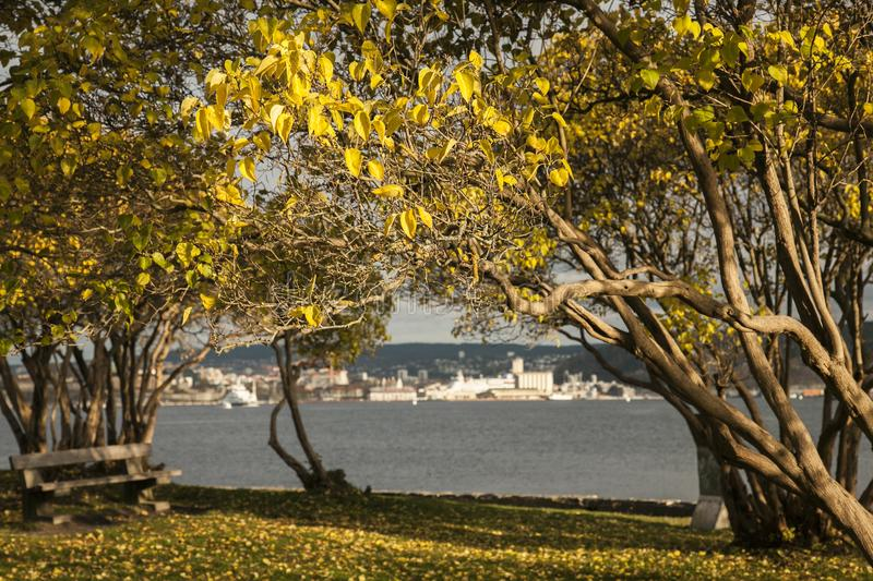 Oslo - the fjord and its dark waters, sunny trees. royalty free stock images