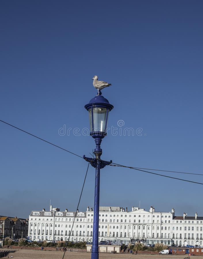Eastbourne, East Sussex - white and blue. This image shows a view of some white buildings in Eastbourne, East Sussex. It was taken on a sunny day in October royalty free stock photography