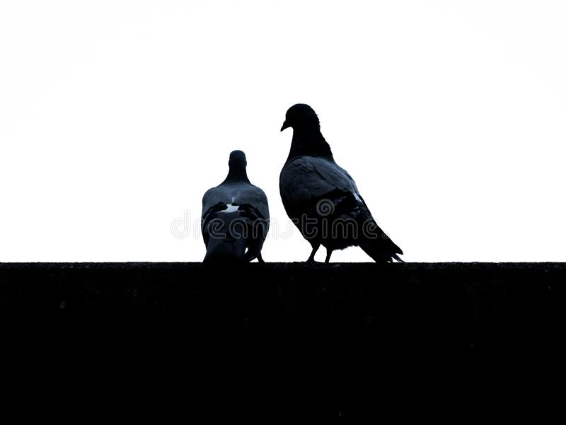 Image of silhouettes from doves with white background royalty free stock photography