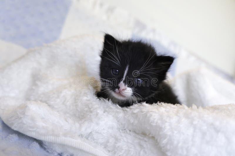 Small black kitten snuggling in the blankets. Image of small black kitten snuggling in the blankets stock photo