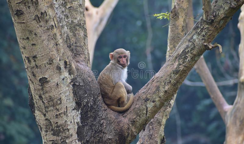 This is an image a small monkey on the tree royalty free stock photos