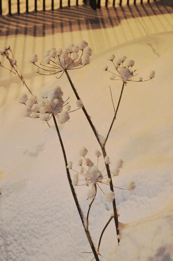 Snow flowers by the road at night. stock images