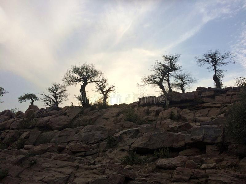 Rugged Trees Silhouetted on a Rocky Hill stock photos