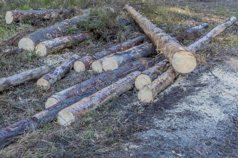 Image of some wooden logs of felled trees next to a path in a zone controlled deforestation. On a winter day in the Belgian Ardennes stock images