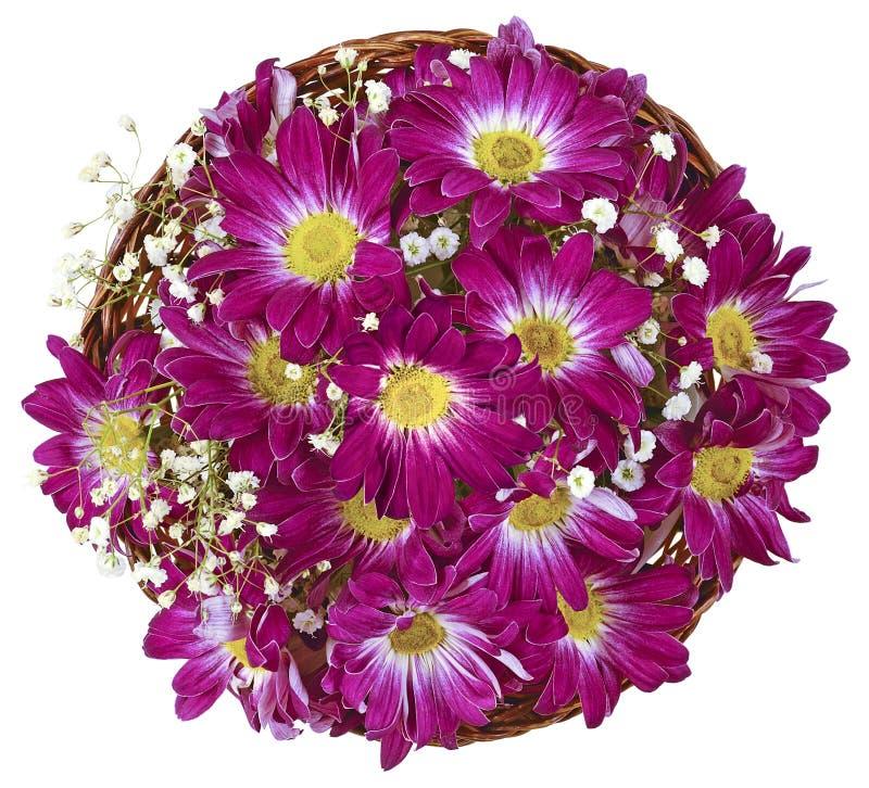 Chrysanthemum basket circle insulated royalty free stock images