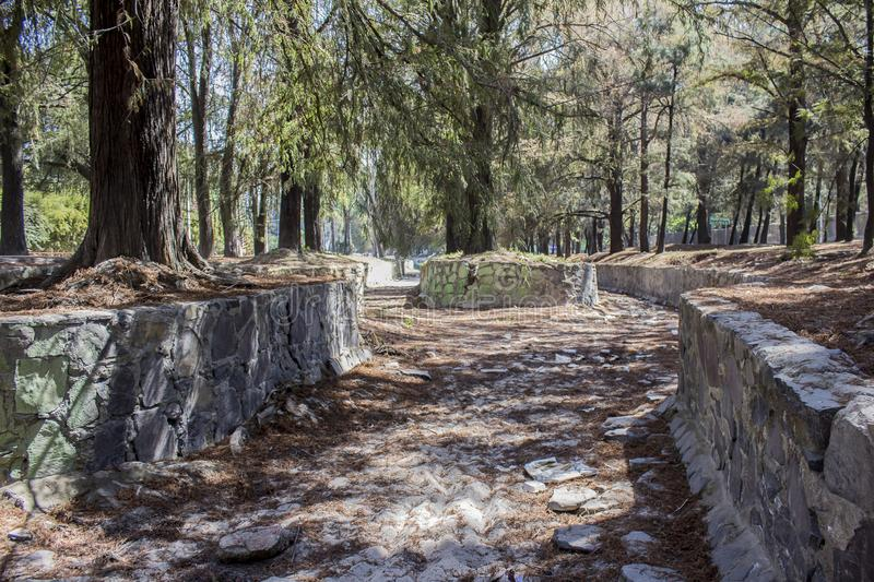 Image of a stone water channel that is dry and covered by pine needles surrounded by trees. On a sunny day in the city of Guadalajara, Jalisco Mexico royalty free stock image