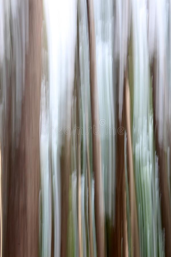 Image of tree trunks in dreamy line background done with photography technique known as panning. Beautiful backdrop of dream-like trees in forest, done with stock photography