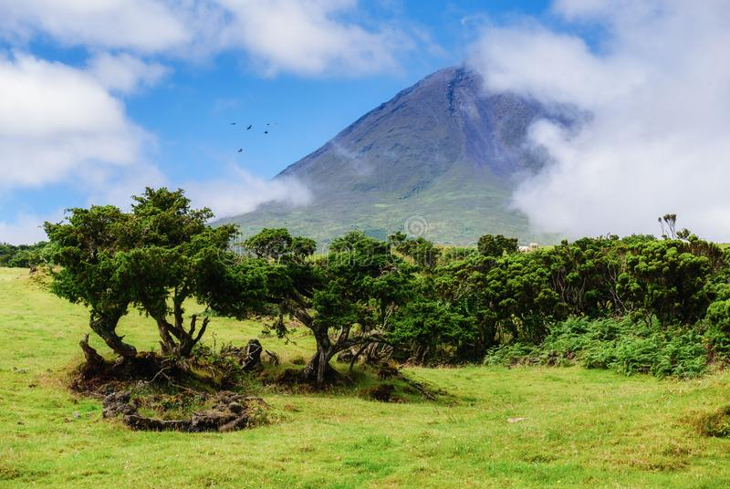 Image of trees below the big mountain of pico stock photos