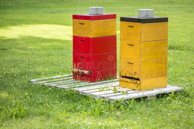 Two bee hives in the green grass royalty free stock photography
