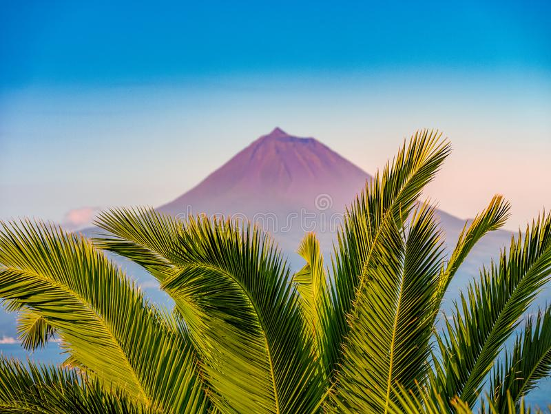 Image of the volcano mountain of pico with palm trees in the foreground stock images