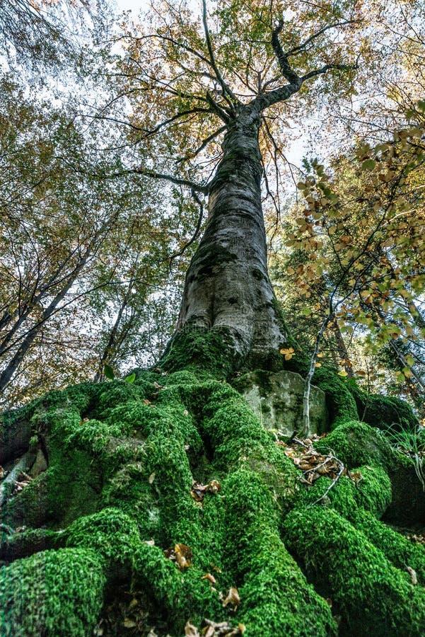 Image vue de dessous d'un arbre avec de grandes racines couvertes par la prison images libres de droits