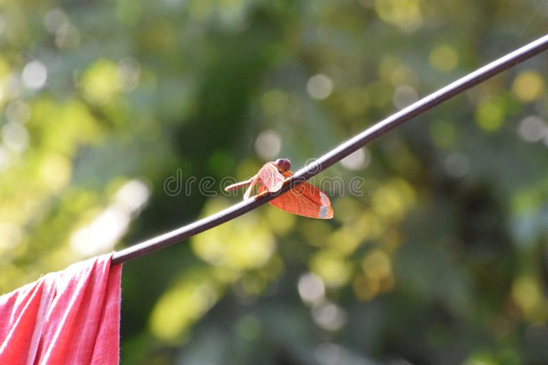 Dragonfly taking rest on a wire royalty free stock images
