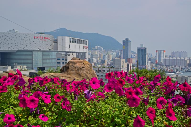 Purple trumpet flower plant with view of Lotte Mall and Busan City skyline stock images