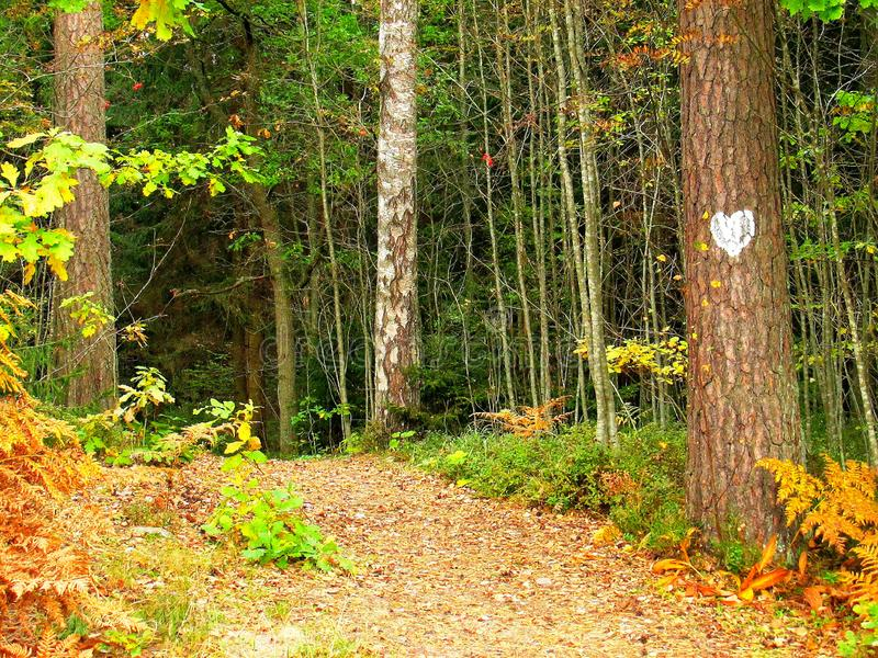 Rendezvous-place at a nearby autumn forest edge royalty free stock photo