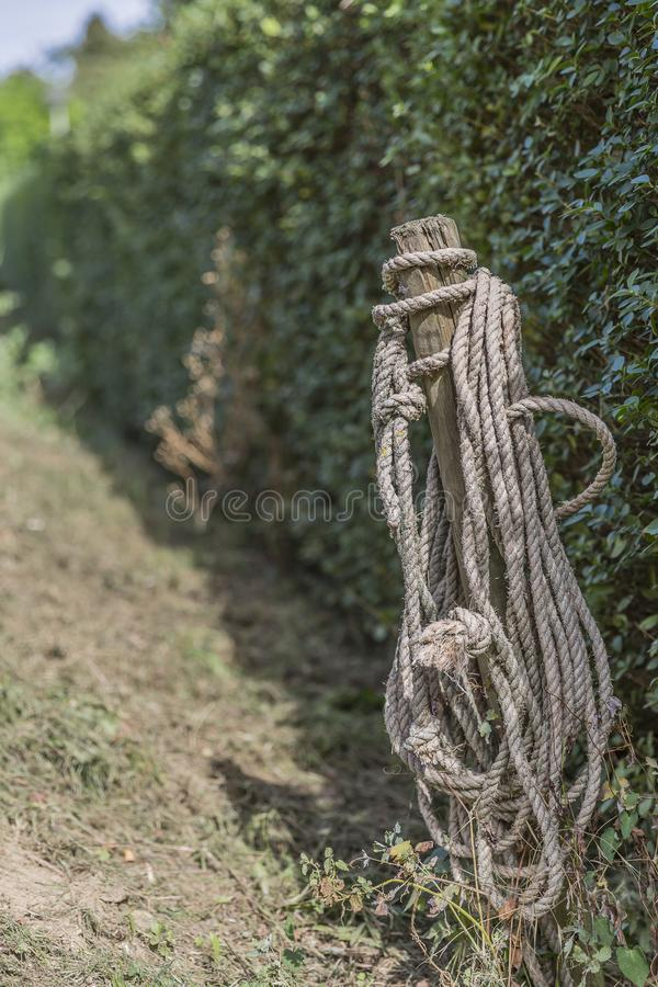 Image of a wooden pole with a rope with green vegetation background. On a sunny day in the Netherlands royalty free stock photos