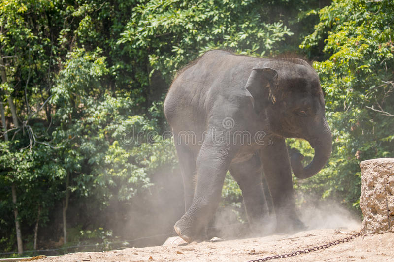 Image of a young elephant on nature background. royalty free stock photography