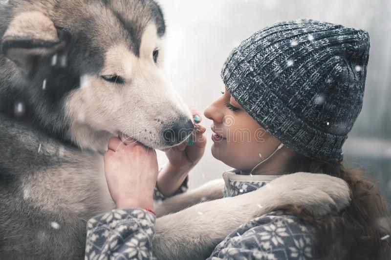 Image of young girl feeding her dog, alaskan malamute, outdoor royalty free stock image