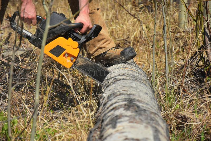 Working Chainsaw Close Up. An image of a young man cutting firewood with a yellow chainsaw stock photos