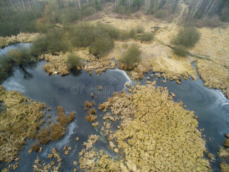 Imagem aérea do pântano no inverno fotos de stock royalty free