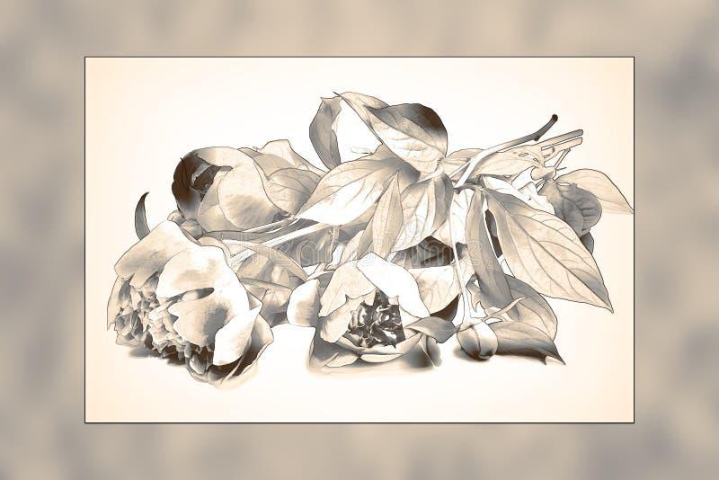 Imagem abstrata de um ramalhete das peônias sob a forma de um desenho de lápis ilustração stock