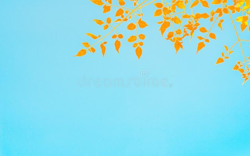 imagem Amarelo-alaranjada da folha em um fundo do céu azul imagem de stock royalty free