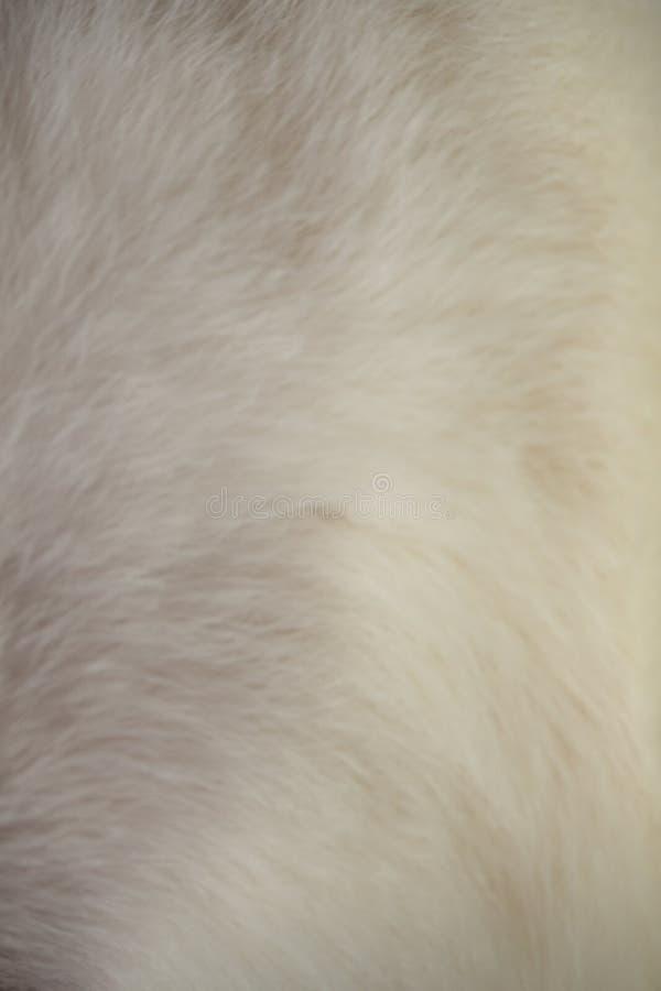 Imagem ascendente próxima da pele macia do gato fotografia de stock