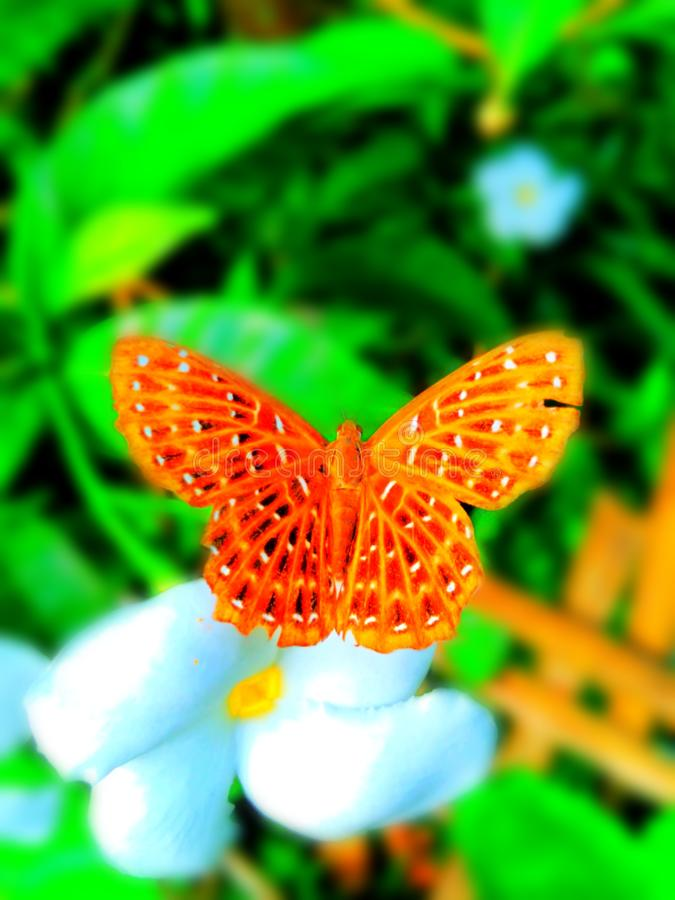 Imagem bonita da borboleta do fundo do borrão fotografia de stock