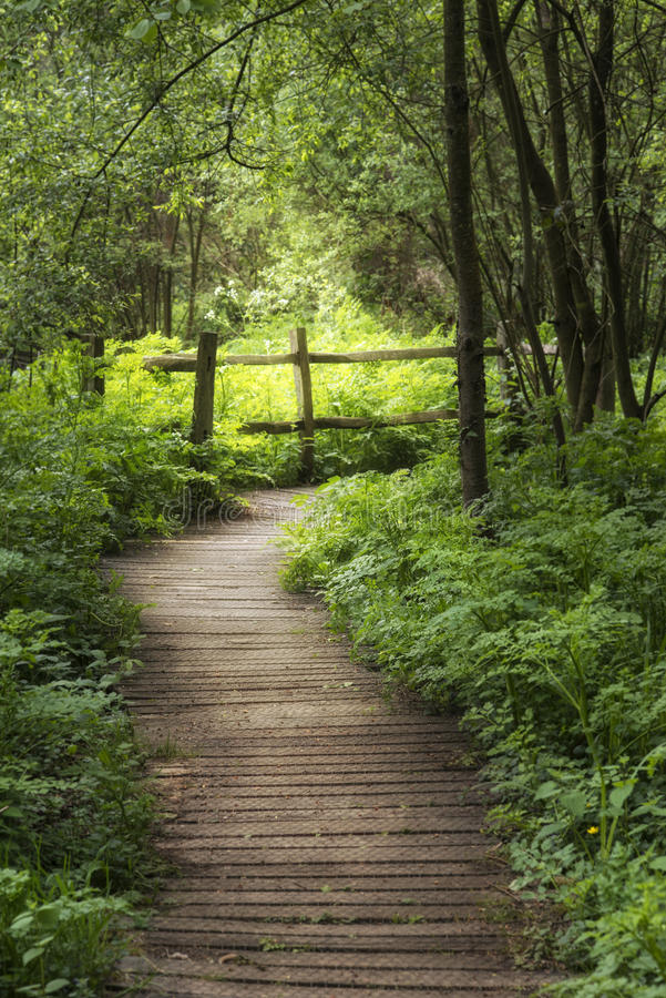 Imagem bonita da paisagem do passeio à beira mar de madeira com o verde luxúria fotos de stock royalty free