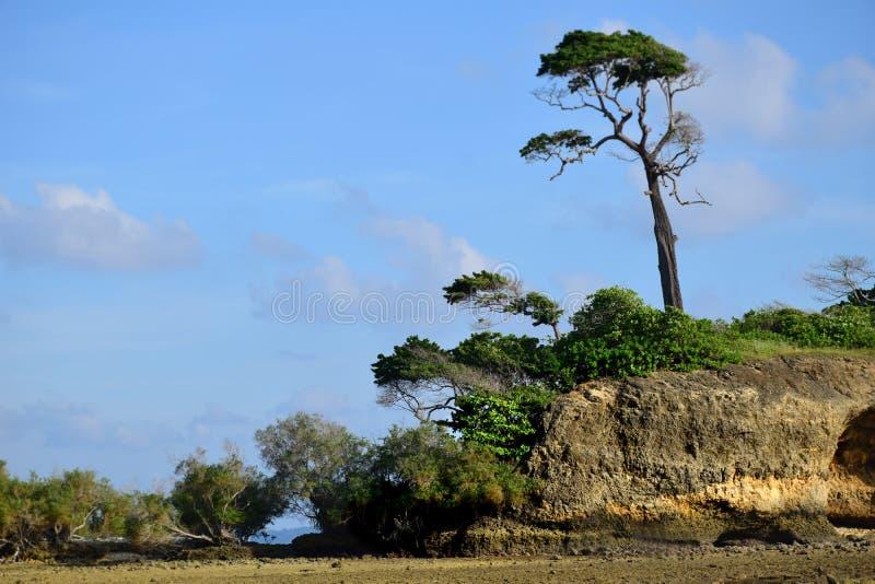 Imagem bonita da praia da paisagem de Coral Beach natural enchida com os corais inoperantes e vivos em Neil Island em Andaman e e fotos de stock